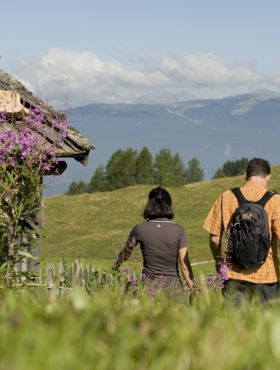 Hiking holiday at the Hotel Alpenflora in Castelrotto